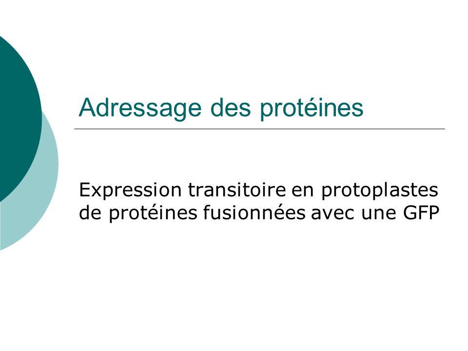 Adressage des protéines Expression transitoire en protoplastes de protéines fusionnées avec une GFP