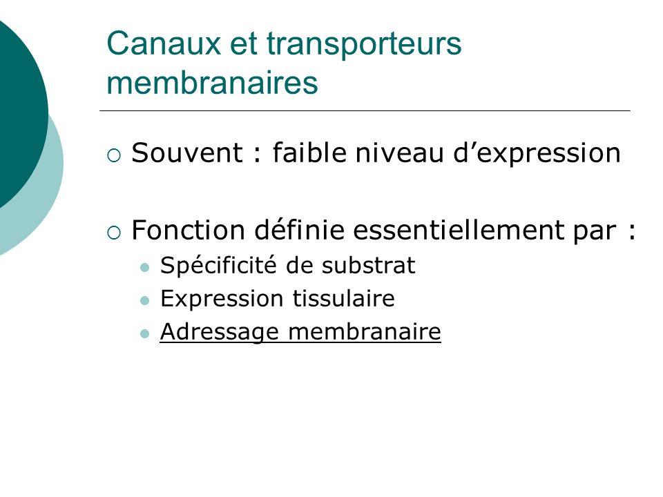 Canaux et transporteurs membranaires Souvent : faible niveau dexpression Fonction définie essentiellement par : Spécificité de substrat Expression tissulaire Adressage membranaire