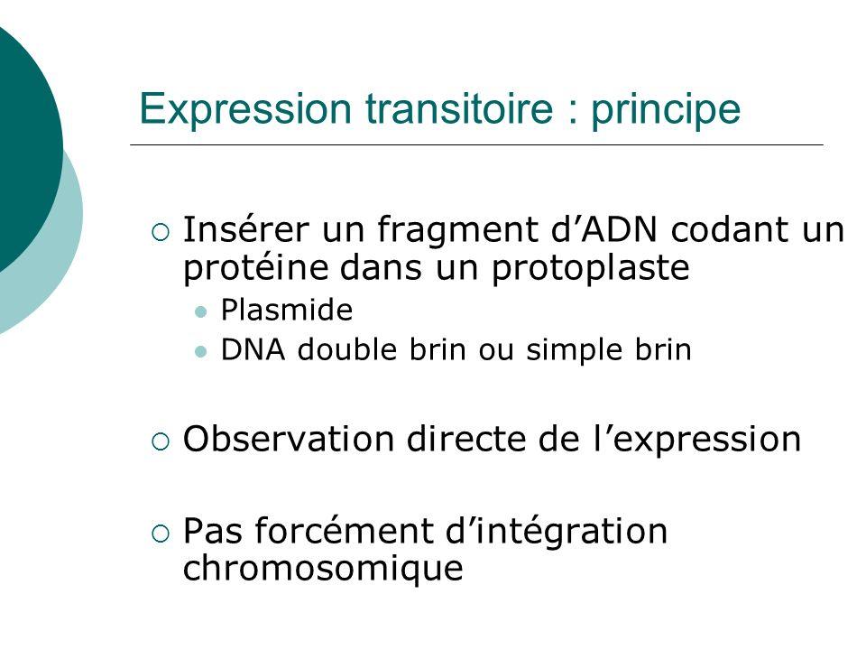 Expression transitoire : principe Insérer un fragment dADN codant un protéine dans un protoplaste Plasmide DNA double brin ou simple brin Observation directe de lexpression Pas forcément dintégration chromosomique