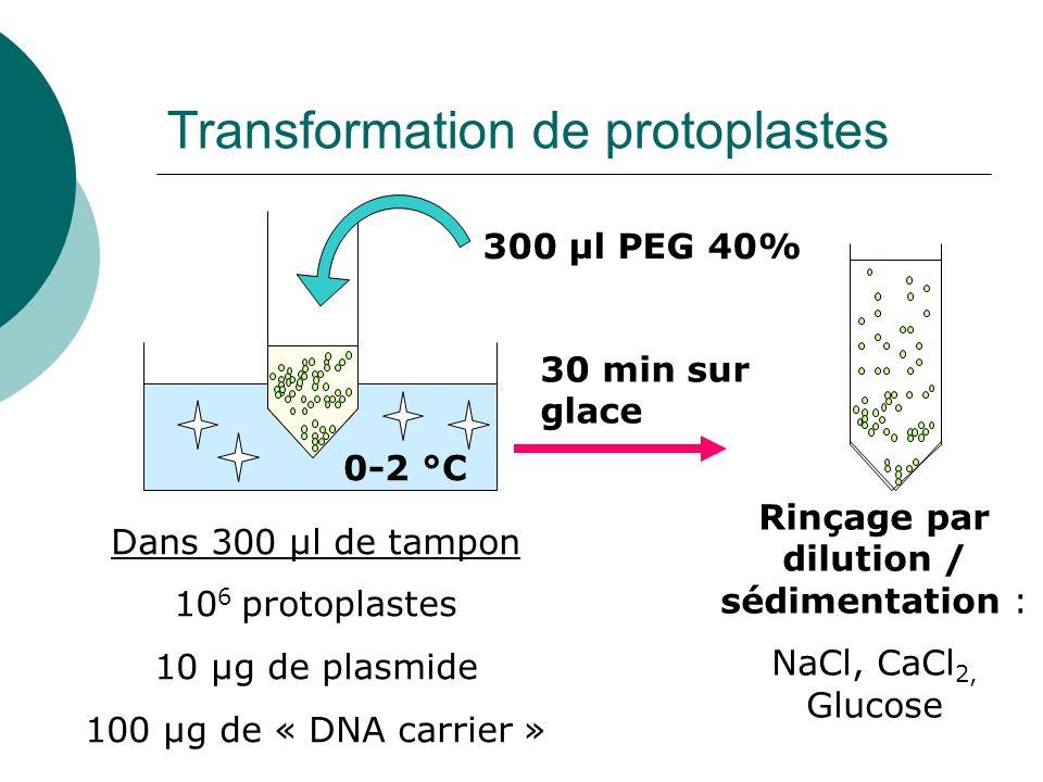 Transformation de protoplastes Dans 300 µl de tampon 10 6 protoplastes 10 µg de plasmide 100 µg de « DNA carrier » 0-2 °C 300 µl PEG 40% 30 min sur glace Rinçage par dilution / sédimentation : NaCl, CaCl 2, Glucose