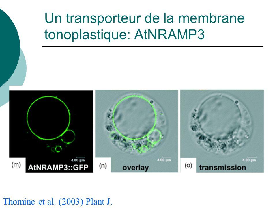 Thomine et al. (2003) Plant J. Un transporteur de la membrane tonoplastique: AtNRAMP3