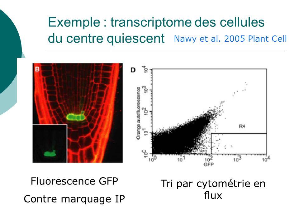 Exemple : transcriptome des cellules du centre quiescent Tri par cytométrie en flux Fluorescence GFP Contre marquage IP Nawy et al.