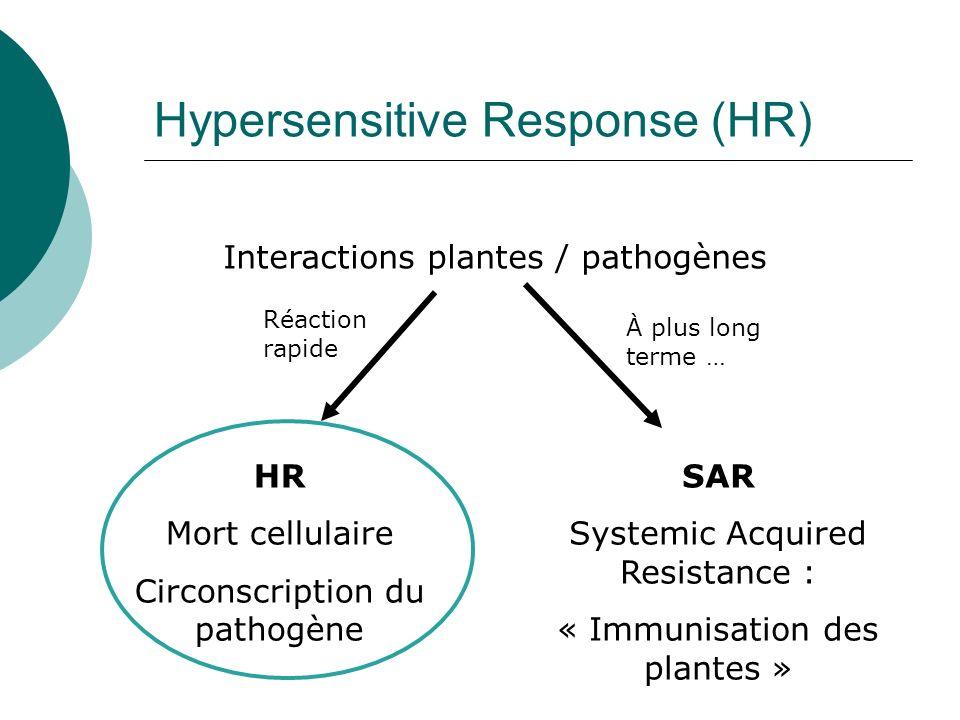 Hypersensitive Response (HR) Interactions plantes / pathogènes HR Mort cellulaire Circonscription du pathogène SAR Systemic Acquired Resistance : « Immunisation des plantes » Réaction rapide À plus long terme …