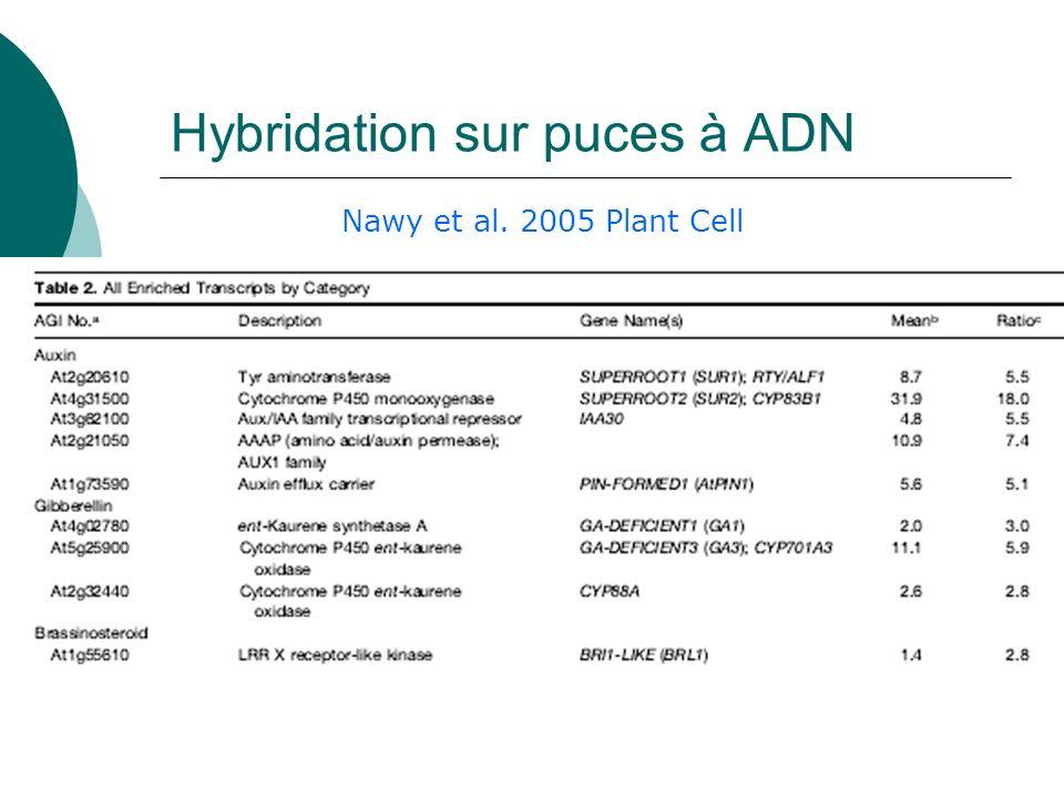 Hybridation sur puces à ADN Nawy et al. 2005 Plant Cell