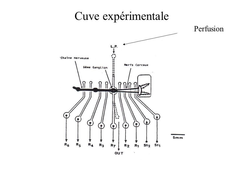Cuve expérimentale Perfusion
