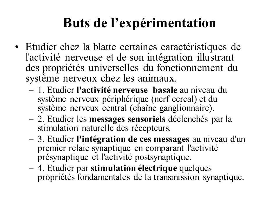 Buts de lexpérimentation Etudier chez la blatte certaines caractéristiques de l'activité nerveuse et de son intégration illustrant des propriétés univ