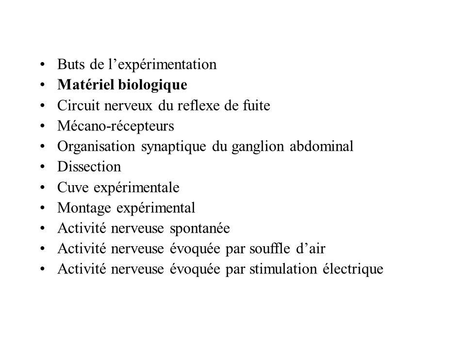 Buts de lexpérimentation Matériel biologique Circuit nerveux du reflexe de fuite Mécano-récepteurs Organisation synaptique du ganglion abdominal Dissection Cuve expérimentale Montage expérimental Activité nerveuse spontanée Activité nerveuse évoquée par souffle dair Activité nerveuse évoquée par stimulation électrique