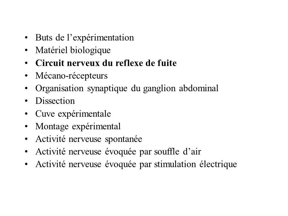 Circuit nerveux du reflexe de fuite 1