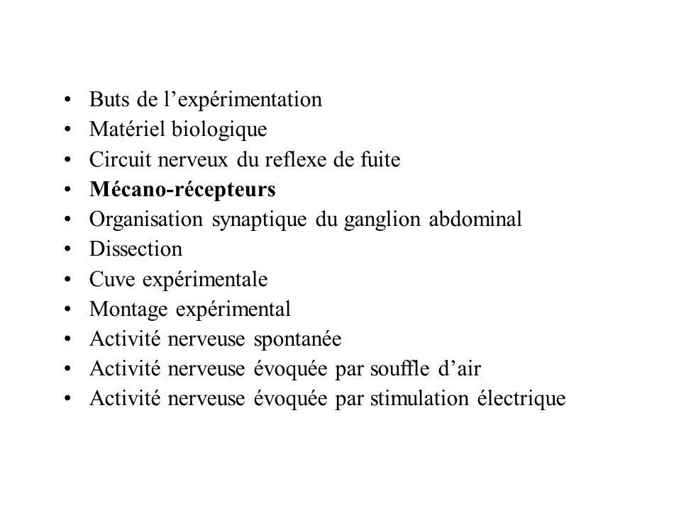 Buts de lexpérimentation Matériel biologique Circuit nerveux du reflexe de fuite Mécano-récepteurs Organisation synaptique du ganglion abdominal Disse