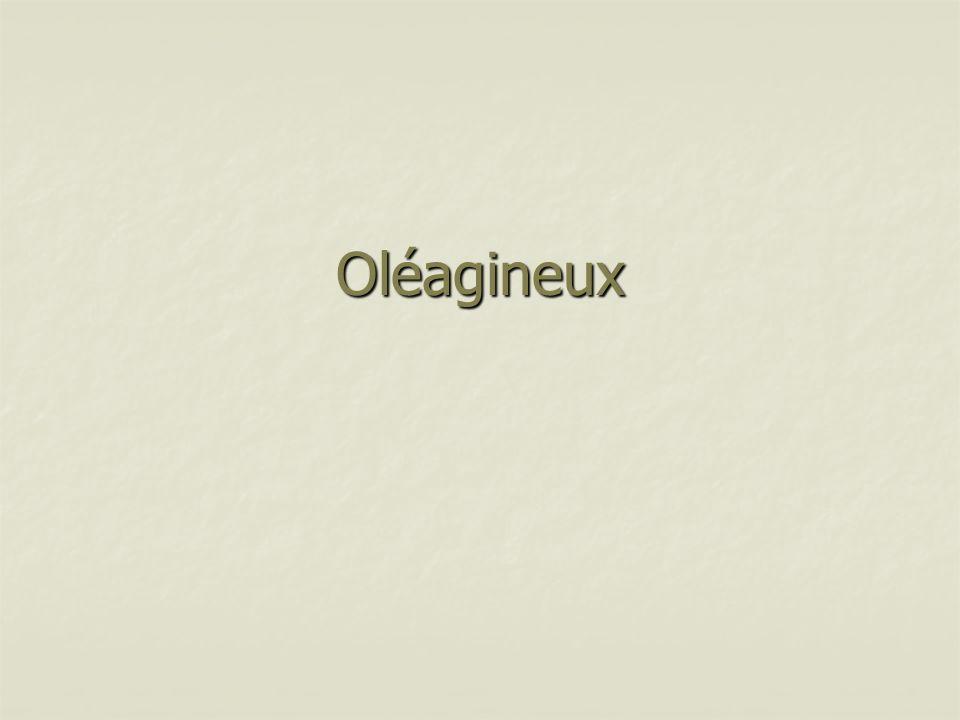 Oléagineux