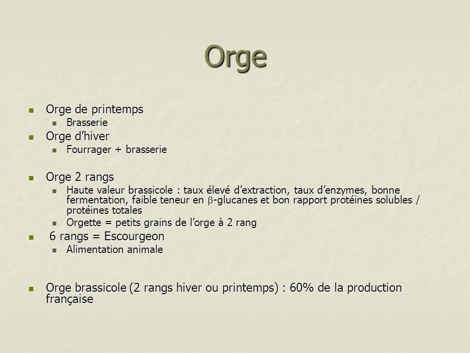 Orge Principaux composants Principaux composants Amidon Amidon Protéines 10-11% (optimal brasserie) Protéines 10-11% (optimal brasserie) Lipides Lipides Fibres alimentaires 12 à 18% Fibres alimentaires 12 à 18% Composés anti-nutritionnels Composés anti-nutritionnels (1,3/1,4) glucanes : 6-7 % (1,3/1,4) glucanes : 6-7 % Tanins et polyphénols Tanins et polyphénols Carences et déséquilibres Carences et déséquilibres Déficit Lysine / Richesse AA soufrés Déficit Lysine / Richesse AA soufrés Critères brassicoles Critères brassicoles (1-3/1-4) glucanes (1-3/1-4) glucanes Tanins et polyphénols Tanins et polyphénols Pouvoir diastasique = Activité -amylasique Pouvoir diastasique = Activité -amylasique Pas trop de protéines troubles et hydratation Pas trop de protéines troubles et hydratation