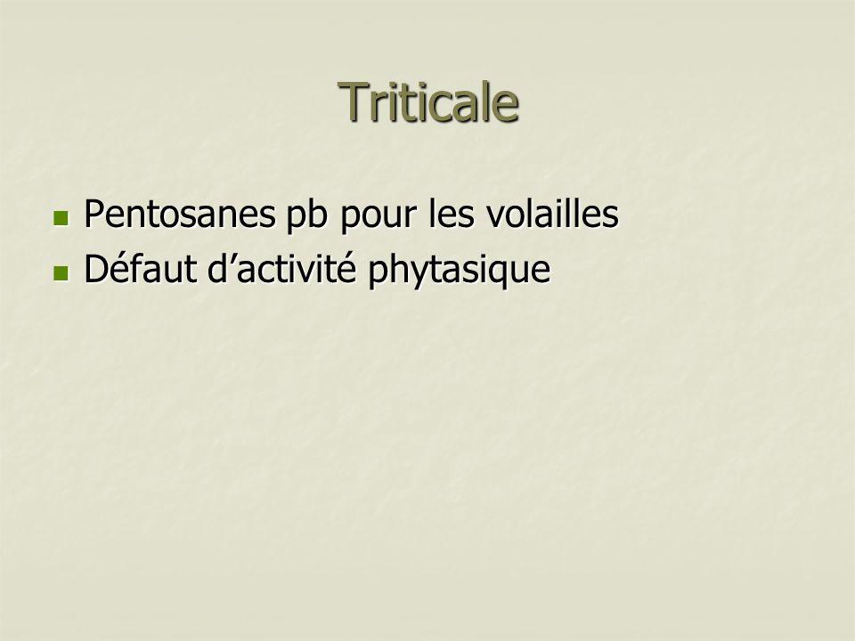 Triticale Pentosanes pb pour les volailles Pentosanes pb pour les volailles Défaut dactivité phytasique Défaut dactivité phytasique