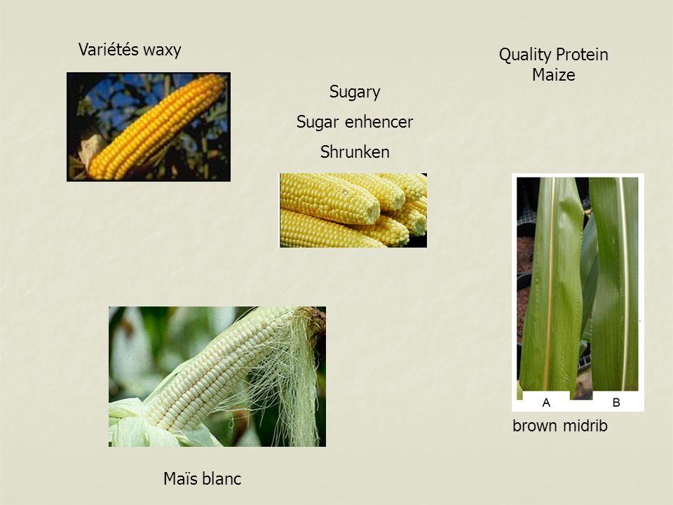 brown midrib Maïs blanc Variétés waxy Sugary Sugar enhencer Shrunken Quality Protein Maize