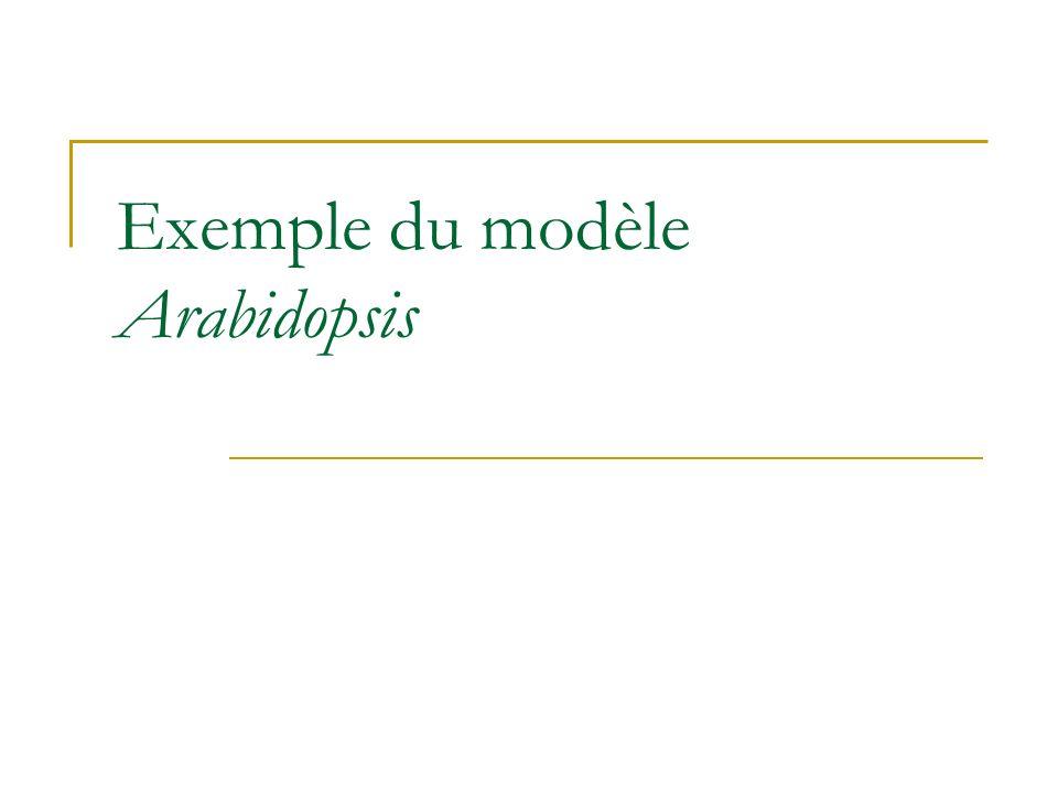 Exemple du modèle Arabidopsis