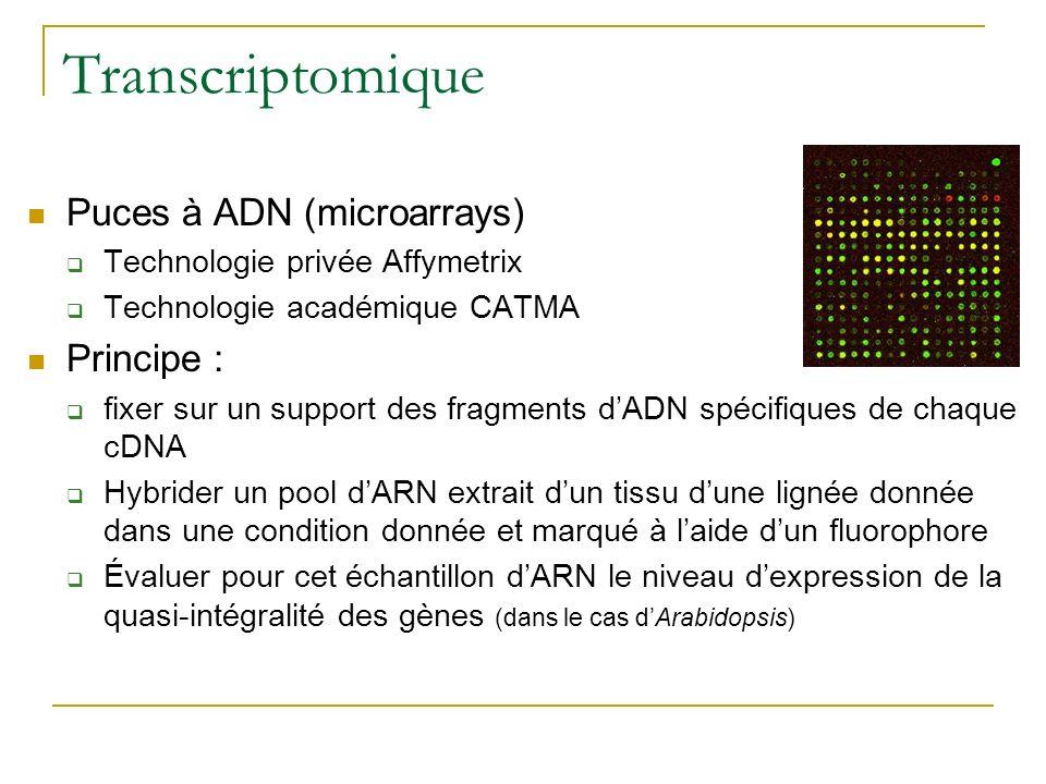 Transcriptomique Puces à ADN (microarrays) Technologie privée Affymetrix Technologie académique CATMA Principe : fixer sur un support des fragments dA