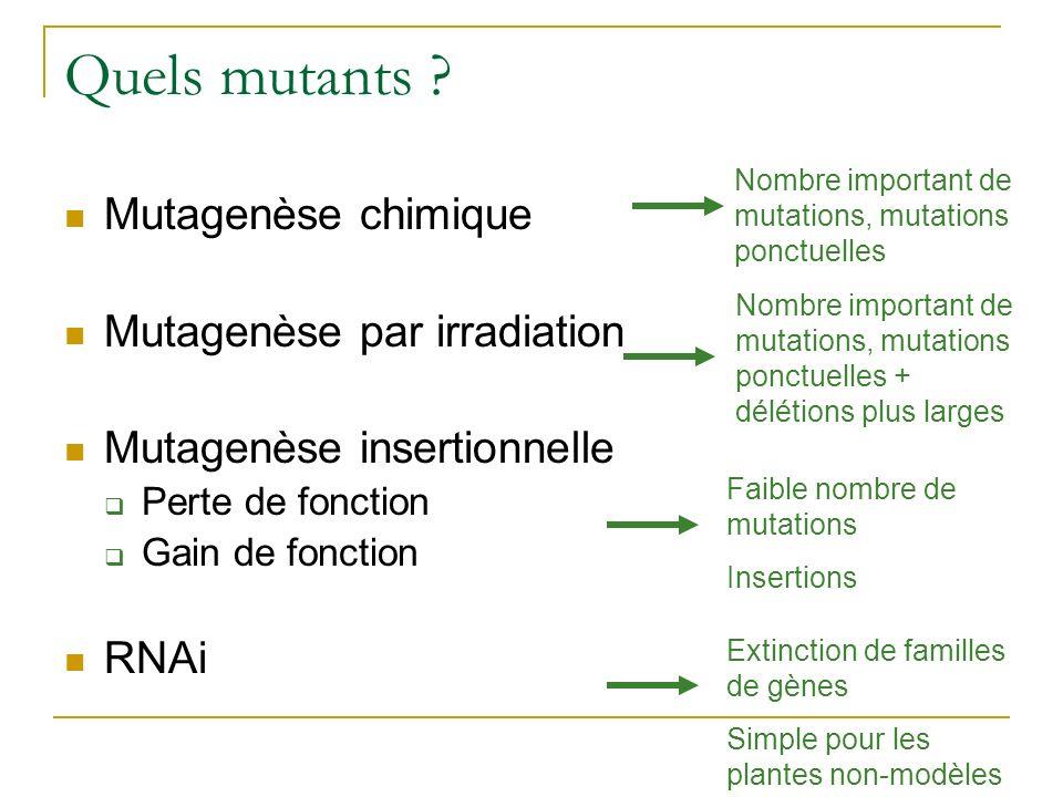Quels mutants ? Mutagenèse chimique Mutagenèse par irradiation Mutagenèse insertionnelle Perte de fonction Gain de fonction RNAi Nombre important de m