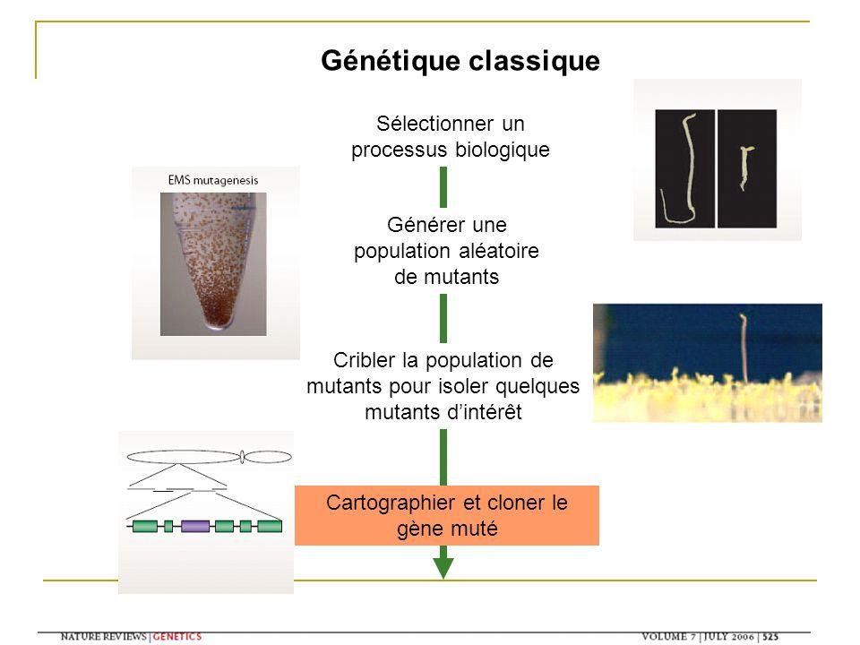 Génétique classique Sélectionner un processus biologique Générer une population aléatoire de mutants Cribler la population de mutants pour isoler quel