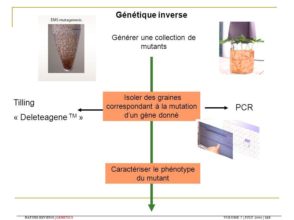 Générer une collection de mutants Génétique inverse Isoler des graines correspondant à la mutation dun gène donné Caractériser le phénotype du mutant Tilling « Deleteagene TM » PCR