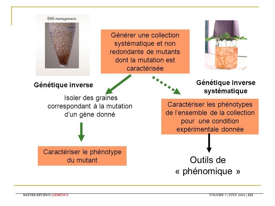 Générer une collection systématique et non redondante de mutants dont la mutation est caractérisée Isoler des graines correspondant à la mutation dun