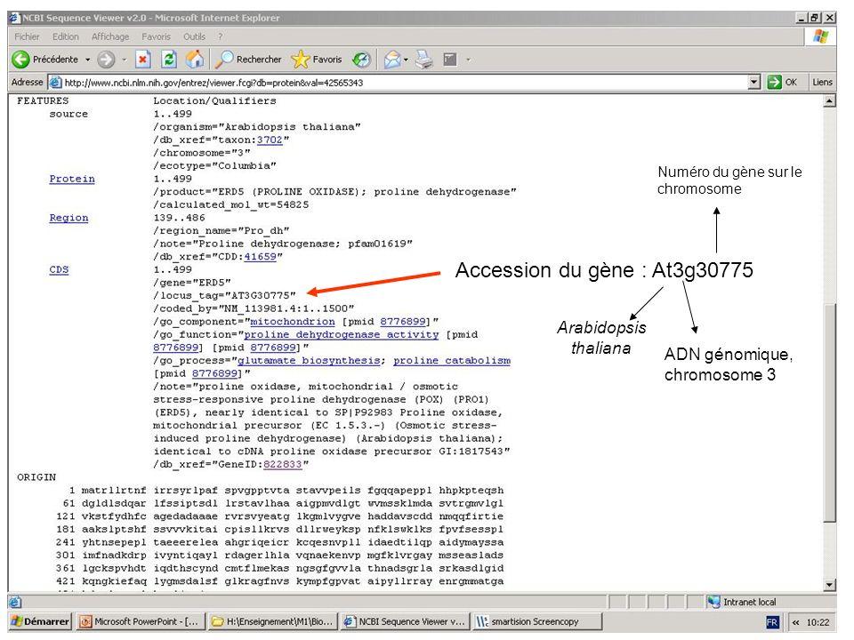 Accession du gène : At3g30775 Arabidopsis thaliana ADN génomique, chromosome 3 Numéro du gène sur le chromosome