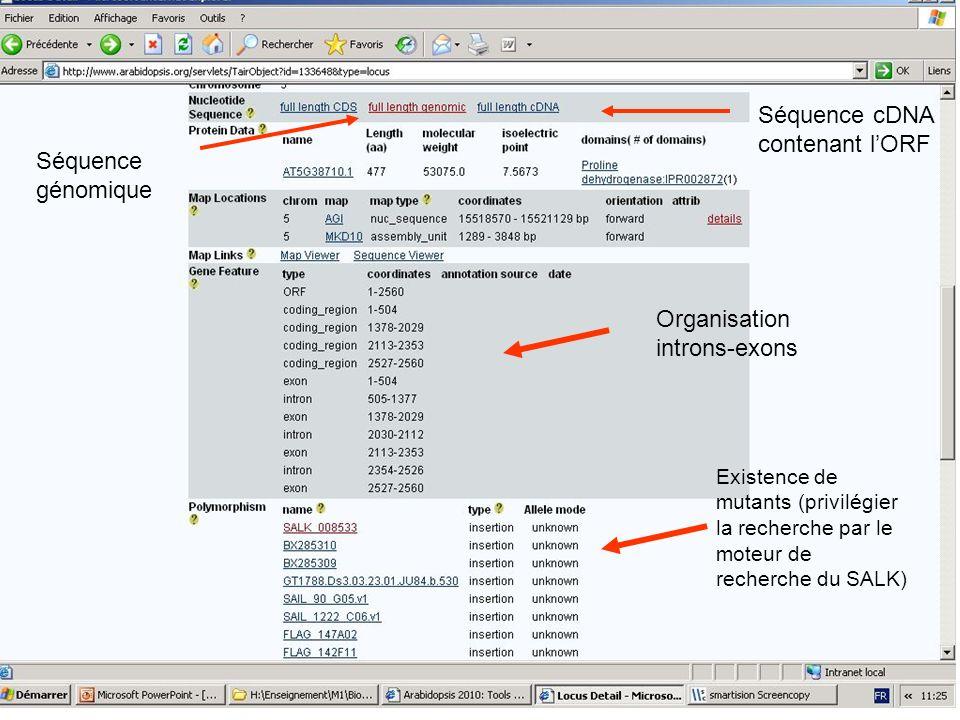 Organisation introns-exons Existence de mutants (privilégier la recherche par le moteur de recherche du SALK) Séquence génomique Séquence cDNA contena