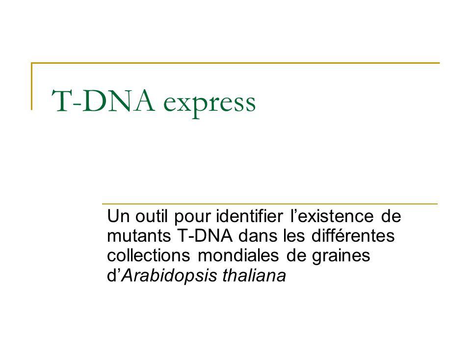 T-DNA express Un outil pour identifier lexistence de mutants T-DNA dans les différentes collections mondiales de graines dArabidopsis thaliana