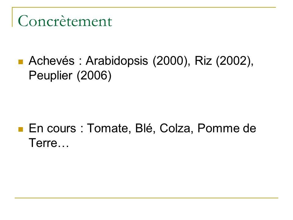 Concrètement Achevés : Arabidopsis (2000), Riz (2002), Peuplier (2006) En cours : Tomate, Blé, Colza, Pomme de Terre…