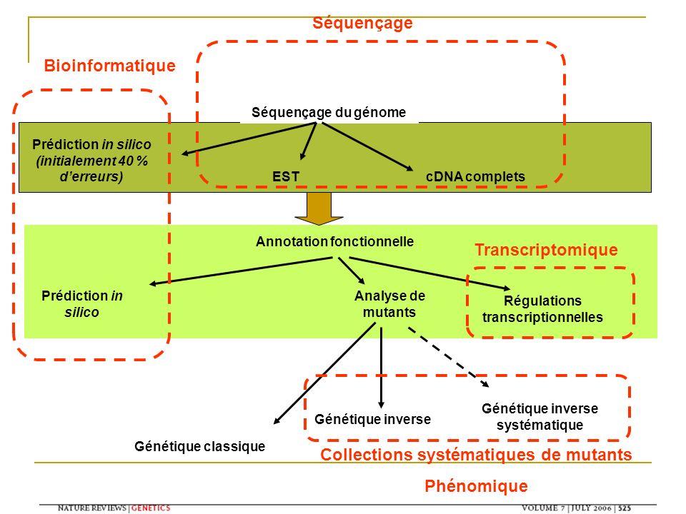 Annotation fonctionnelle Séquençage du génome Prédiction in silico (initialement 40 % derreurs) cDNA completsEST Prédiction in silico Analyse de mutan