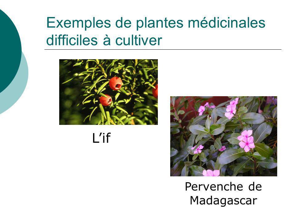 Culture de plantes aux champs Plantes médicinales ~7000 ha en France Culture peu coûteuse Mais, ce nest pas toujours possible…