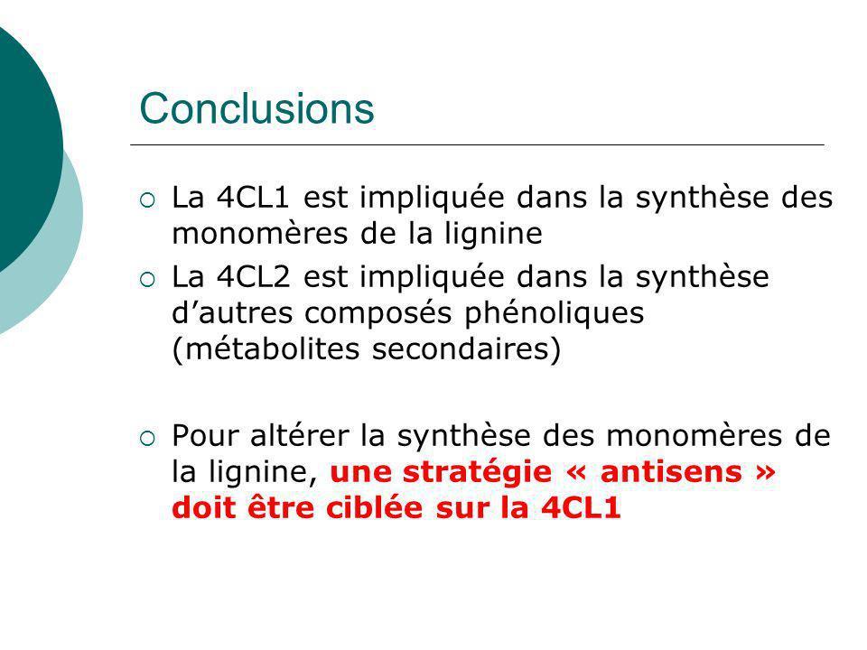 Localisation histologique de lexpression de Pt4CL1 et Pt4CL2 Épiderme Xylème Northern BlotActivité GUS Feuilles Tiges 4CL2 4CL1 Hu et al.