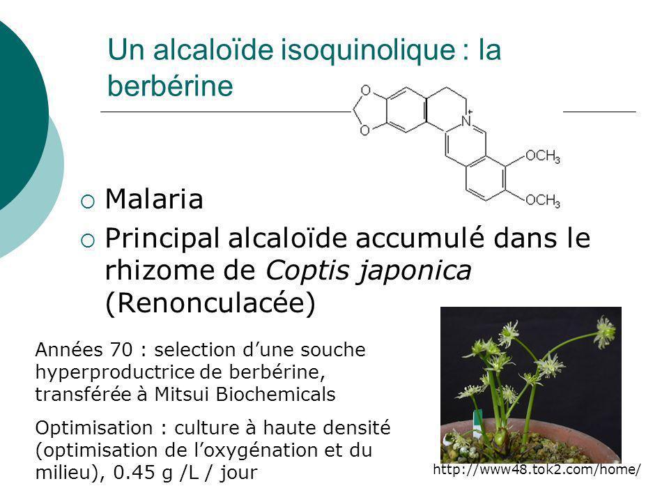 Trois succès durables Shikonine Berbérine Cultures cellulaires Saponines du ginseng Cultures de racines à grande échelle