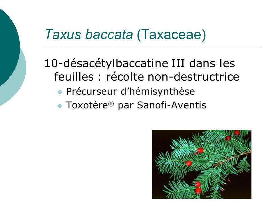 Culture in vitro pour la synthèse de Taxol Taxol: traitement 1g /an 1g = 3 arbres (Taxus sp., lIf) de 150 ans Productivité in vitro : 100-150 mg / L en deux semaines