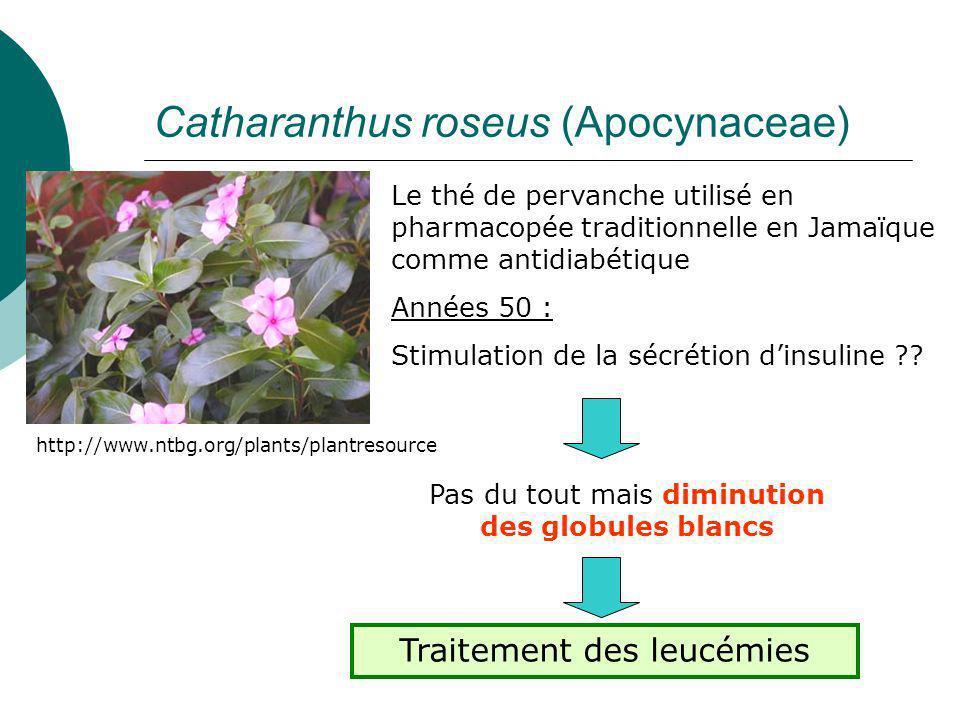 Taxus baccata (Taxaceae) 10-désacétylbaccatine III dans les feuilles : récolte non-destructrice Précurseur dhémisynthèse Toxotère ® par Sanofi-Aventis