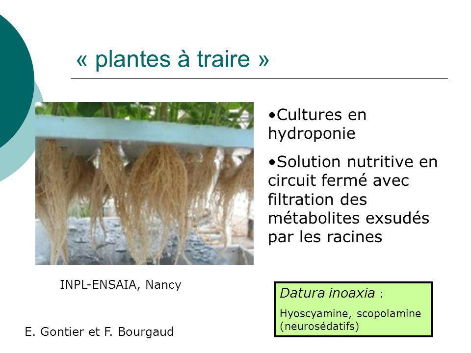 La croissance Stratégies alternatives : hairy roots