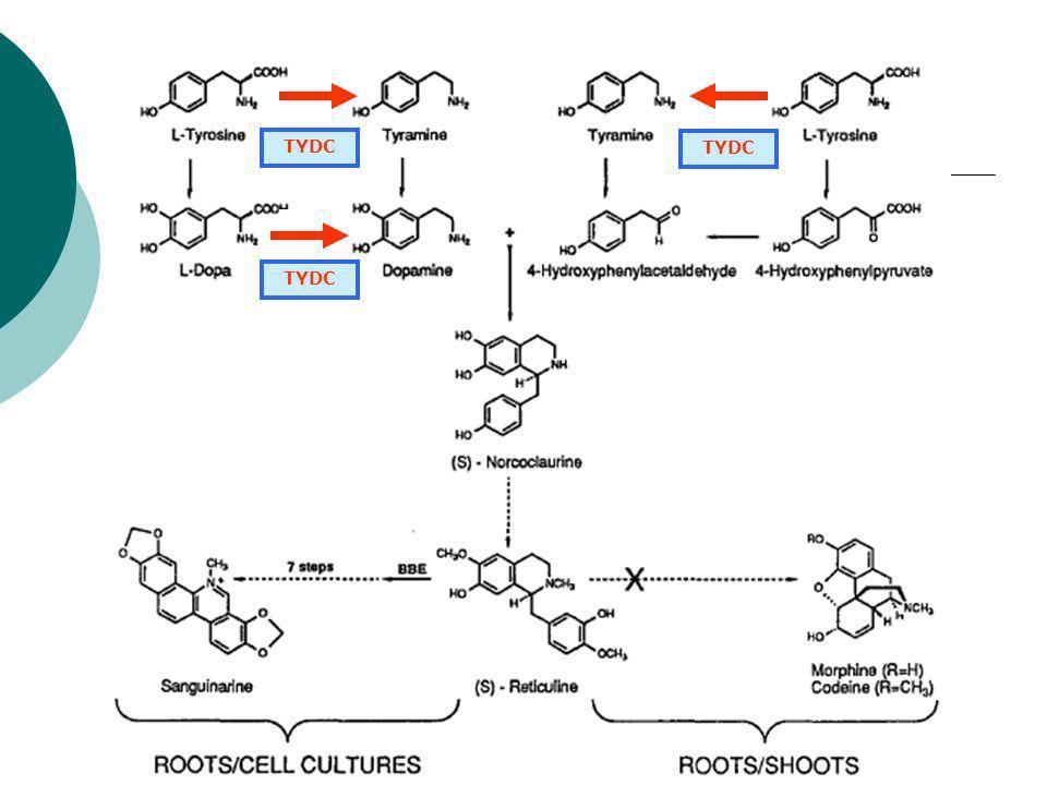 Elicitation par un facteur biotique de la synthèse de sanguinarine Un alcaloïde isoquinoléique synthétisé dans les suspensions cellulaires dopium