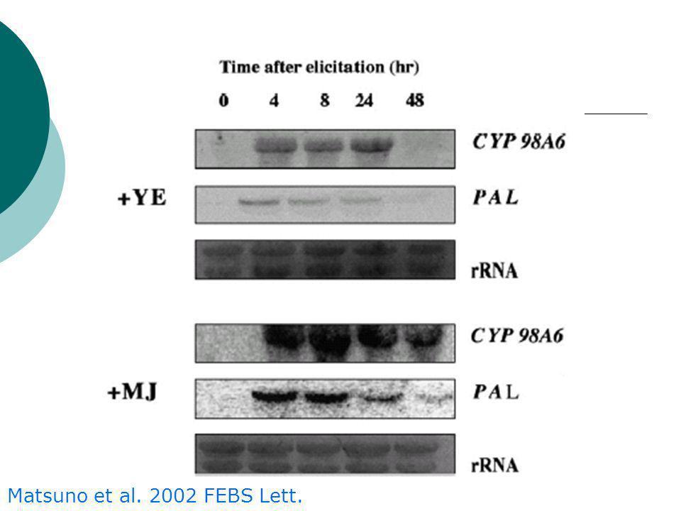 Matsuno et al.2002 FEBS Lett.