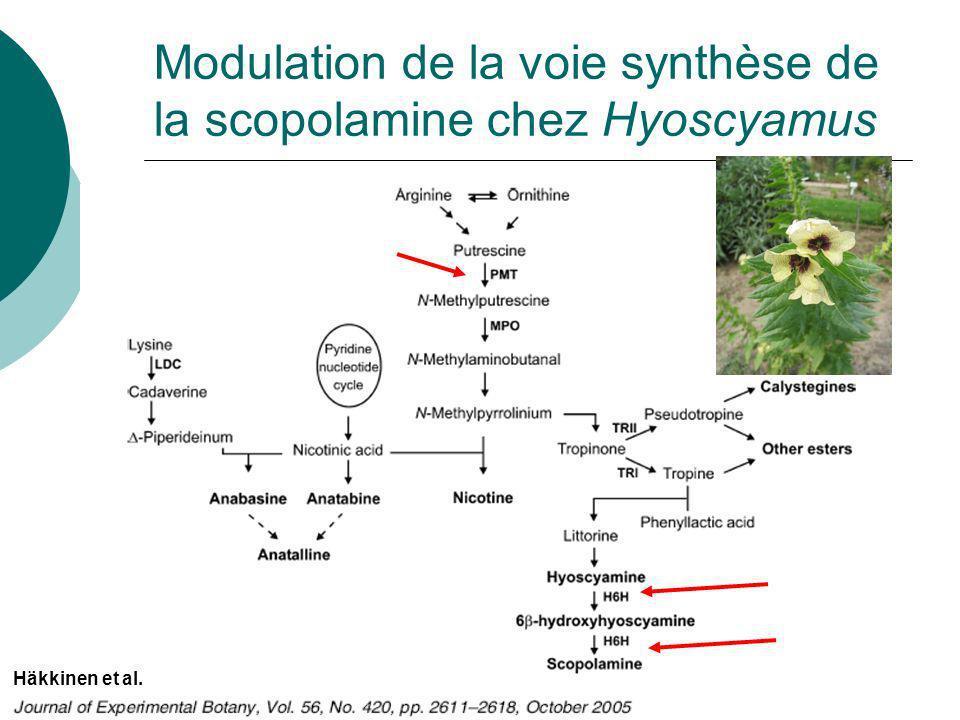 Capell et Christou (2004) Curr. Opin. Biotech. Stratégie « Étape enzymatique »