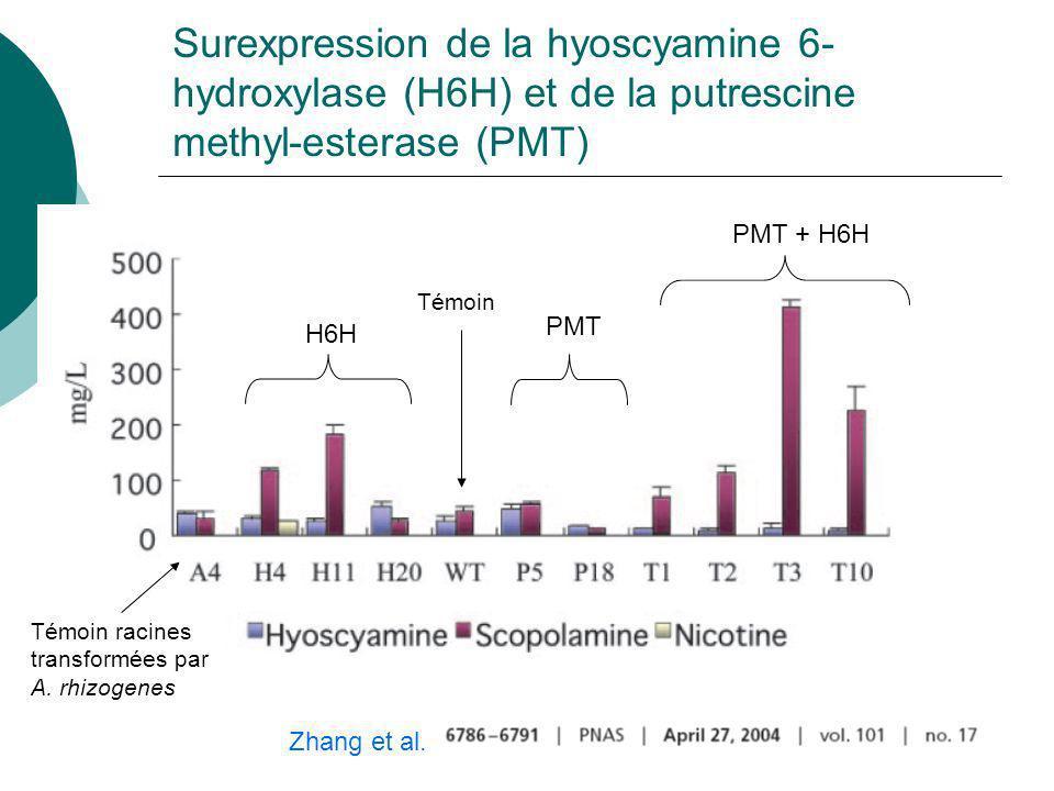 Modulation de la voie synthèse de la scopolamine chez Hyoscyamus Häkkinen et al.