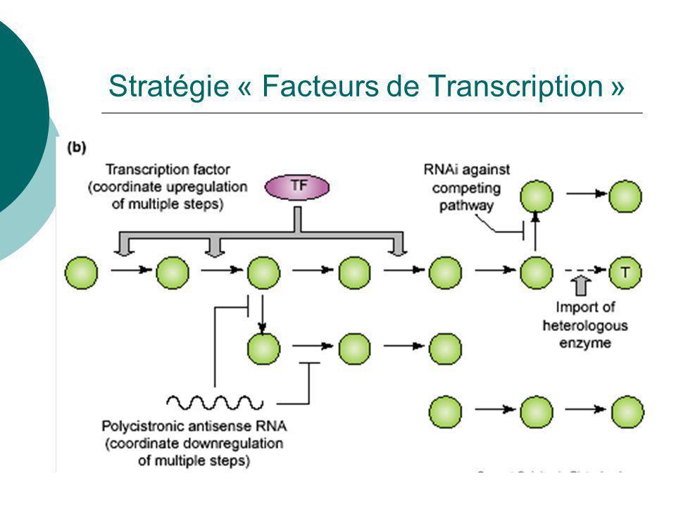Stratégie « Facteurs de transcription» Moduler lexpression de gènes codant les enzymes impliquée dans toute une chaîne de biosynthèse