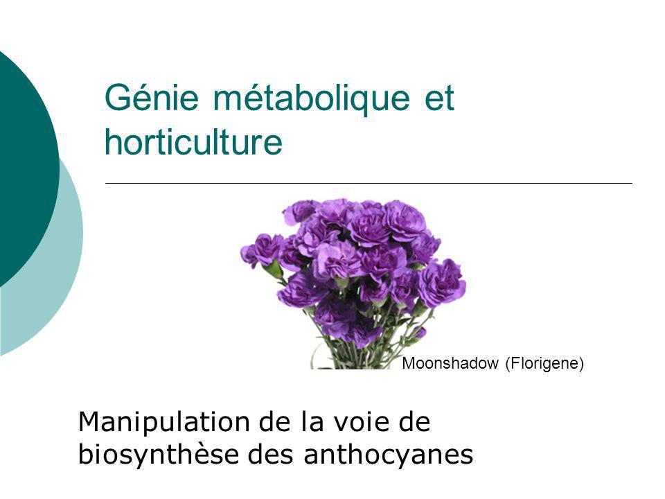 Lecture conseillée pour approfondir les aspects « bioréacteur » http://www.fao.org/docrep/t0831e/t0831e00.htm#con PLANT TISSUE CULTURE: AN ALTERNATIVE FOR PRODUCTION OF USEFUL METABOLITE
