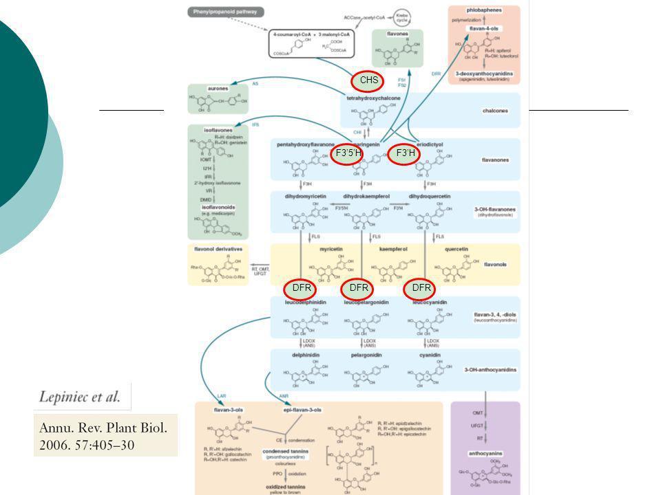 Génie métabolique et horticulture Manipulation de la voie de biosynthèse des anthocyanes Moonshadow (Florigene)