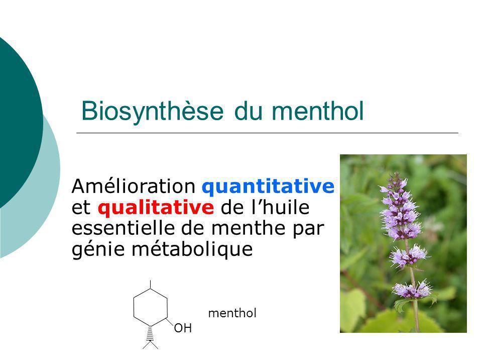 Génie métabolique et plantes aromatiques