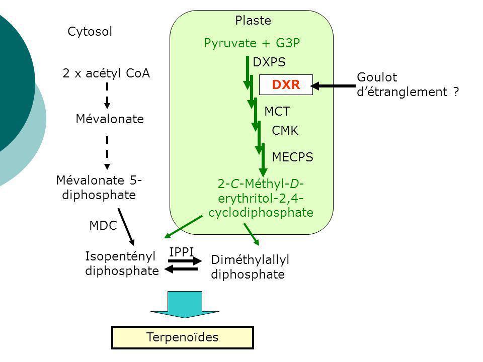 Deux approches Quantitative Modulation des activités enzymatiques en amont de la voie de biosynthèse Qualitative Modulation des activités enzymatiques en aval de la voie de biosynthèse