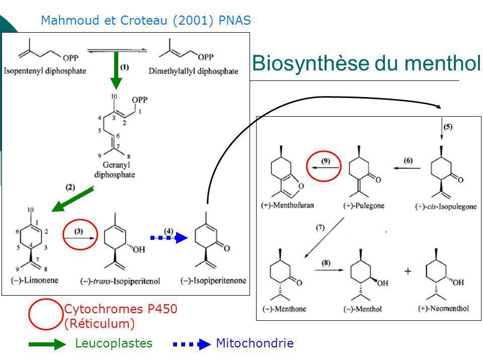Surexpression de la 1-deoxyxylulose-5- phosphate reductoisomerase (DXR) chez la menthe poivrée Augmentation de rendement sans changement de composition LignéeRendement huile (mg/g MF) Sauvage1.8 DXR62.6 DXR72.3 DXR82.4 Mahmoud et Croteau (2001) PNAS
