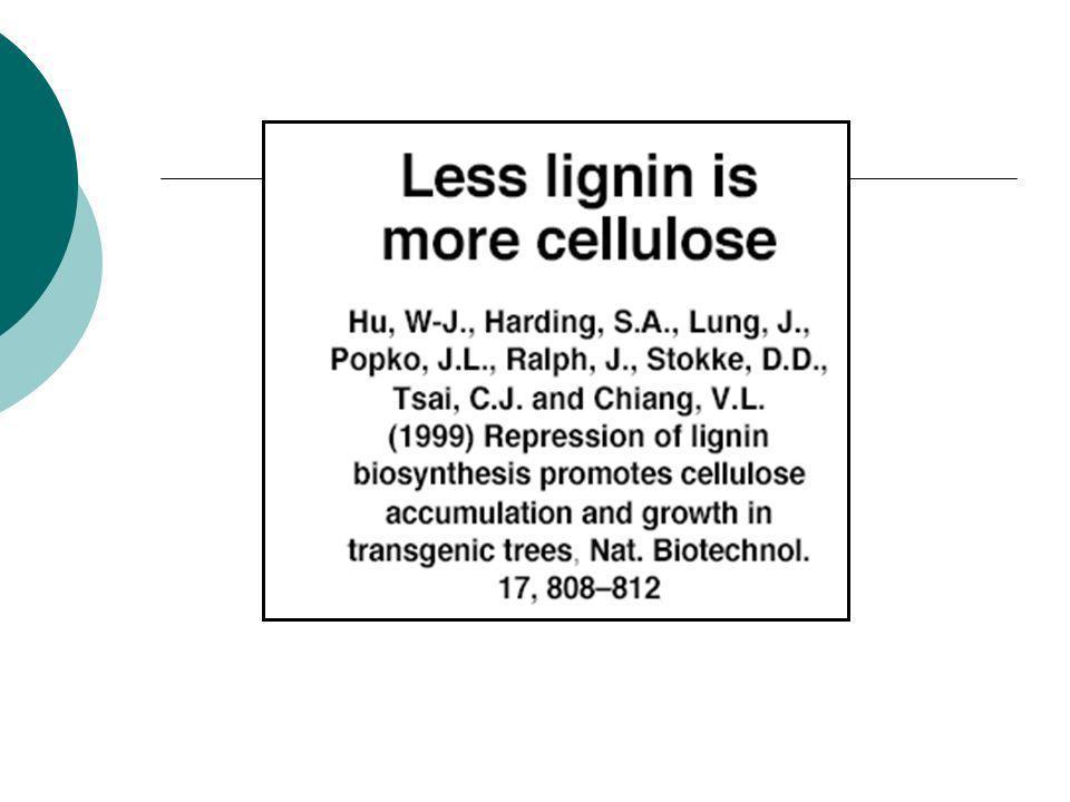 Augmenter le ratio cellulose/lignine par génie génétique Stratégie n°1 : amélioration quantitative