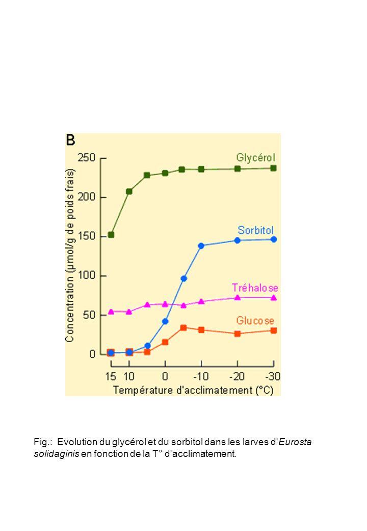 Fig.: Evolution du glycérol et du sorbitol dans les larves d'Eurosta solidaginis en fonction de la T° d'acclimatement.