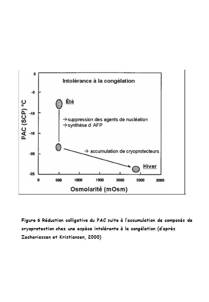 Figure 6 Réduction colligative du PAC suite à laccumulation de composés de cryoprotection chez une espèce intolérante à la congélation (daprès Zachari