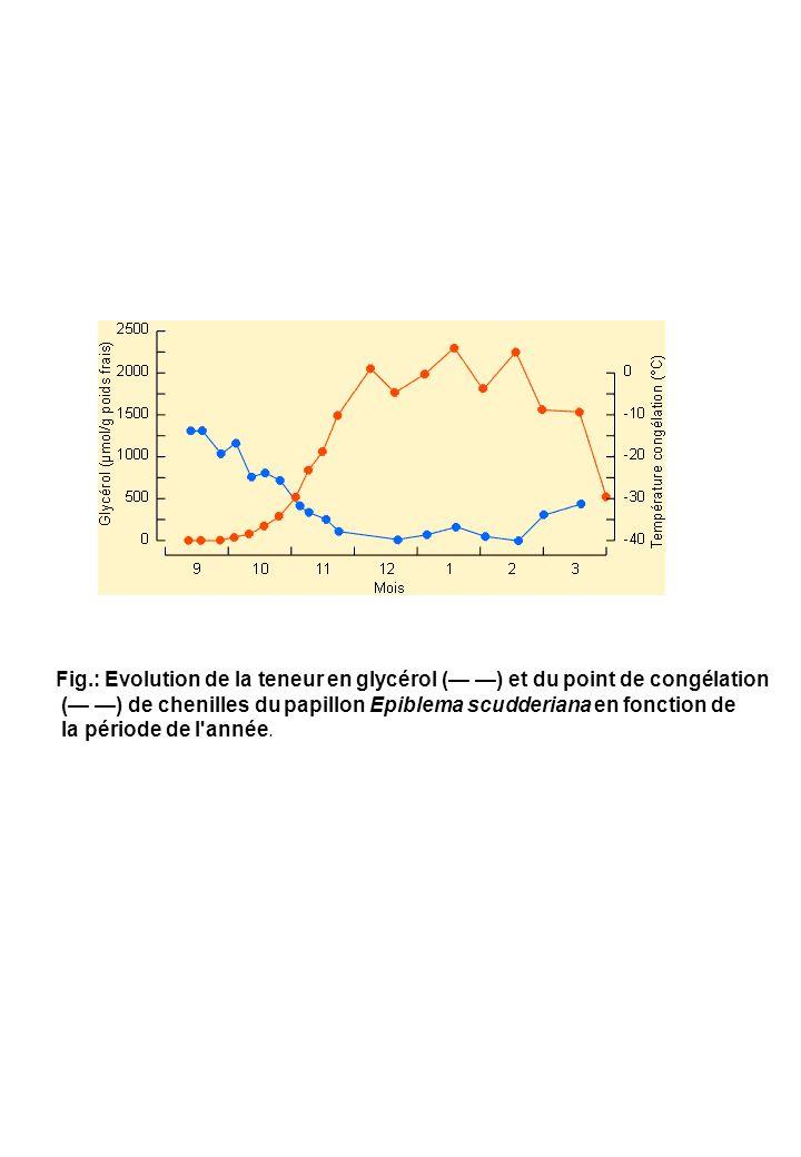Fig.: Evolution de la teneur en glycérol ( ) et du point de congélation ( ) de chenilles du papillon Epiblema scudderiana en fonction de la période de