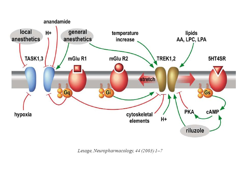 Lesage, Neuropharmacology, 44 (2003) 1–7