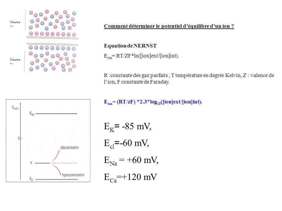 Neurtre + - Neurtre + - Comment déterminer le potentiel déquilibre dun ion ? Equation de NERNST E ion = RT/ZF*ln([ion]ext/[ion]int). R :constante des